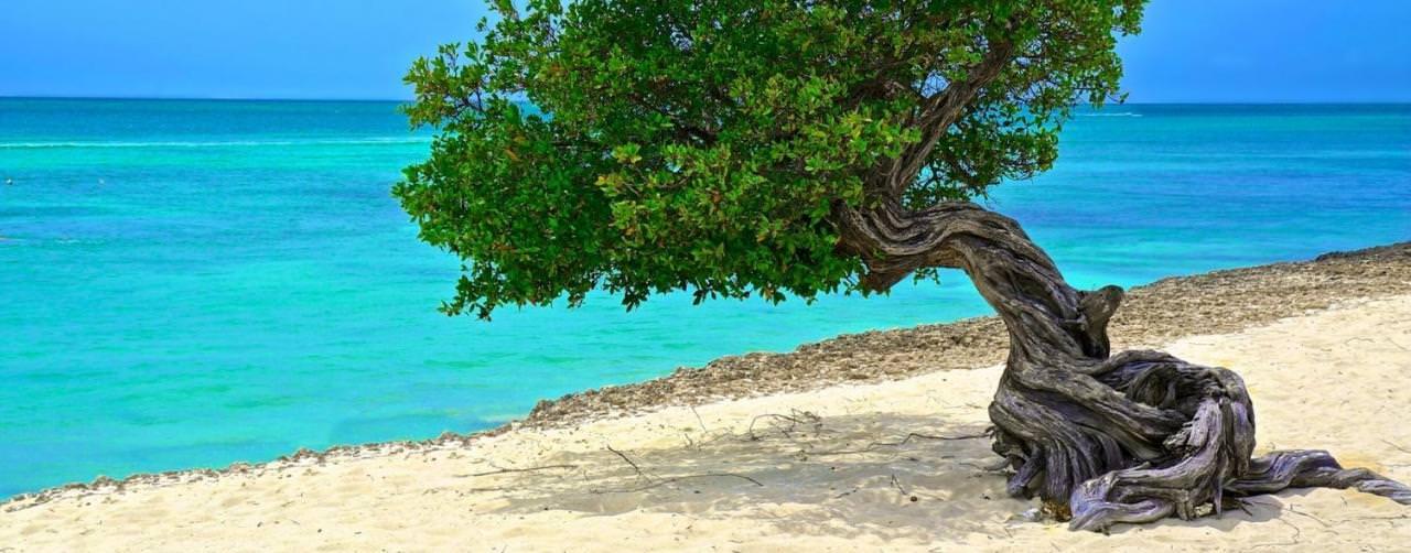 Aruba All Inclusive Resorts